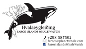 Faroe Islands Whale Watch