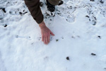 Estimating the size of the footsteps